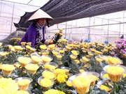 Proponen establecer centros de comercio de flores en ciudades vietnamitas