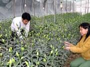 Japón apoya a la provincia vietnamita de Lam Dong en desarrollo agrícola