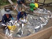 VASEP rechaza informaciones erróneas de prensa extranjera sobre pescado Tra