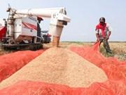 Laos fija meta de exportar 400 mil toneladas de arroz en 2017