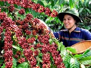 Vietnam empeña esfuerzos para conectarse con cadena global de valores