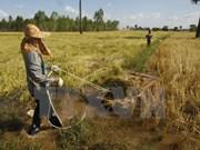 Asistencia internacional a favor del desarrollo agrícola de Camboya