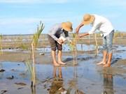 Despliegan en Vietnam proyecto de preservación de humedales