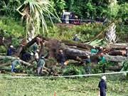 Un muerto y cuatro heridos tras caída de árbol gigante en Singapur