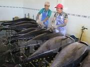 Atún vietnamita sufre elevados impuestos en mercado japonés