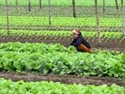 Países Bajos estudia desarrollo de centro de semillero en provincia vietnamita