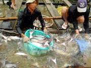 Cría de peces Tra de Vietnam responde a criterios internacionales, afirma GAA