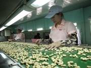 Sector de anacardo enfrenta dificultades por dependencia de importaciones