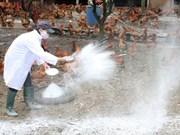 Vietnam intensifica medidas preventivas contra gripe aviar