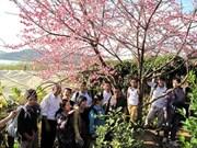 Siembra de cerezos enriquece amistad entre localidades de Vietnam y Japón