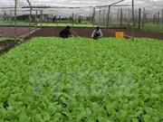 Ofrece Sudcorea asistencia al desarrollo agrícola orgánico en provincia vietnamita