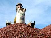 Registran leve aumento de exportaciones agroforestales de Vietnam