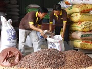 Vietnam suspende importación de cacahuetes de India
