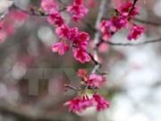 Efectuarán diversas actividades de intercambio cultural Vietnam-Japón