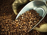 En alza exportaciones de café de Vietnam
