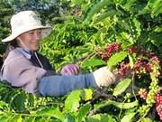 Participa Vietnam en Feria Internacional de Té y Café en Singapur