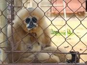 Estimulan participación juvenil en protección de animales silvestres en Vietnam