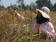 Tailandia venderá 10 millones de toneladas de arroz al exterior