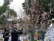 Amor a flores, hilo que enlaza a pueblos de Vietnam y Japón