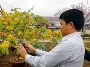 Celebran festival de Flores de Cerezo en localidad norvietnamita