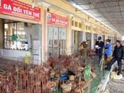 Hanoi realiza simulacro de prevención contra gripe aviar