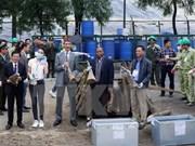 Detectan en Hanoi tráfico ilegal de presuntos cuernos de rinocerontes
