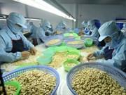 Vietnam registra baja en exportación de anacardos