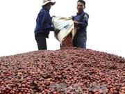 Reanudará la India compra de productos agrícolas vietnamitas