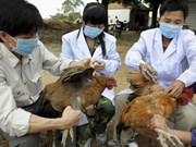 Provincia vietnamita trabaja para prevenir gripe aviar
