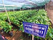 Ciudad Ho Chi Minh y Países Bajos impulsan cooperación en agricultura y tecnología