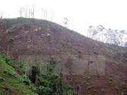 Inician procedimiento legal ante decenas de casos de deforestación en Vietnam