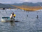 Debaten en Vietnam medidas para viabilizar meta de exportaciones de camarón