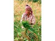 Camboya prohíbe importación de pesticida Tricyclazole a petición de UE