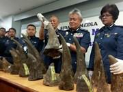 Malasia decomisa gran cantidad de cuernos de rinoceronte en aeropuerto