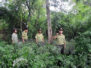 Vietnam implementa programa de reducción de degradación forestal