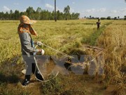 Provincia vietnamita busca desarrollar su marca de arroz