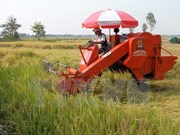 IFC respalda a Vietnam en desarrollo sostenible de agricultura