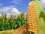Vietnam y EE.UU. impulsan nexos en cooperación agrícola