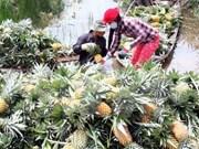 Empresa sudcoreana busca en localidad vietnamita oportunidades de inversión en agricultura