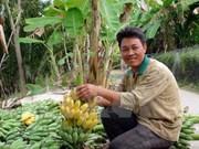 Vietnam ante gran oportunidad de exportación de frutas y vegetales