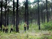 Cobertura forestal de Vietnam alcanza más del 40 por ciento