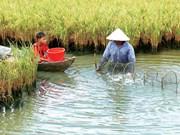 Intensifican conexión en cadenas de valor agrícola en Vietnam