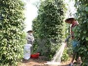 Vietnam y UE estudian oportunidades y retos en sector agrícola