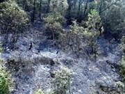 Extinguido incendio forestal en complejo paisajístico patrimonial Trang An