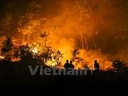 Provincia vietnamita refuerza labores contra incendios forestales