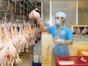 Vietnam exportará primer lote de productos procesados de aves de corral a Japón a fines de 2017