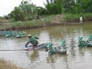 Vietnam acelera la modernización de nuevas zonas rurales