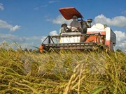 Grupo neerlandés analiza cooperación agrícola con provincia vietnamita