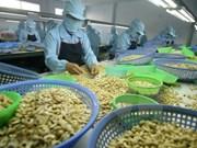 Exportaciones de anacardo de Vietnam alcanzarán 360 mil toneladas