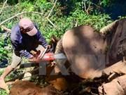 Exportaciones forestales de Vietnam alcanzarán 7,5 mil millones de dólares en 2017